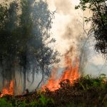 Severe 2015 Indonesian Fire Season Linked to El Niño Drought